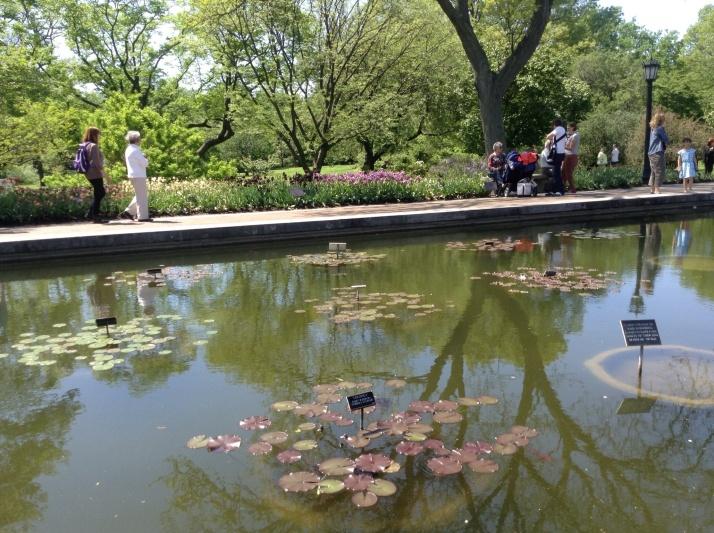 The Brooklyn Botanical Garden
